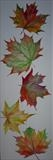 Autumn Leaves by Wilma Seston, Painting, Watercolour on Paper