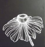 B/W Flower Series 2a by Wilma Seston, Drawing, Acrylic on canvas