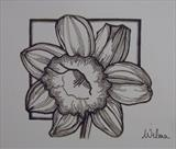 B/W Flower Series 3 by Wilma Seston, Painting, Ink on Paper