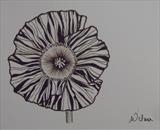 B/W Flower Series 6 by Wilma Seston, Drawing, Pen on Paper