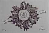 B/W Flower Series 8 by Wilma Seston, Drawing, Pen on Paper