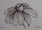 B/W Flower Series 4 by Wilma Seston, Drawing, Pen on Paper
