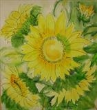 Sunflowers by Wilma Seston, Painting, Acrylic and Ink on canvas